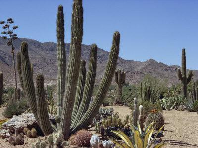 Cactus Plants, Arizona, United States of America, North America