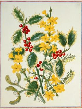 Holly, Winter Jasmine, Heath and Mistletoe by Ursula Hodgson