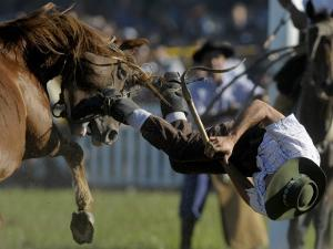 Uruguayan Gaucho, or Cowboy, Falls from a Horse During a Rodeo in Montevideo