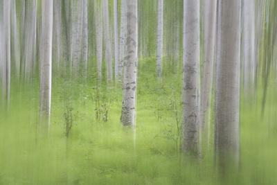 https://imgc.allpostersimages.com/img/posters/usa-alaska-abstract-blur-of-birch-trees_u-L-Q1D062Q0.jpg?p=0