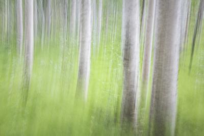 https://imgc.allpostersimages.com/img/posters/usa-alaska-abstract-motion-blur-of-birch-trees_u-L-Q1CZSHI0.jpg?artPerspective=n
