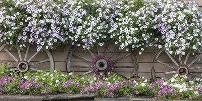 https://imgc.allpostersimages.com/img/posters/usa-alaska-chena-hot-springs-flowers-and-wagon-wheels_u-L-Q1CZRIZ0.jpg?p=0