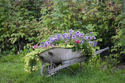 https://imgc.allpostersimages.com/img/posters/usa-alaska-chena-hot-springs-old-wheelbarrow-with-flowers_u-L-Q1D066A0.jpg?p=0