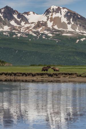 https://imgc.allpostersimages.com/img/posters/usa-alaska-katmai-national-park-coastal-brown-bears-in-marsh_u-L-Q1CZZ090.jpg?artPerspective=n