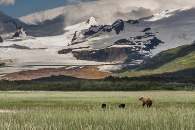 https://imgc.allpostersimages.com/img/posters/usa-alaska-katmai-national-park-hallo-bay-coastal-brown-bear-with-twins_u-L-Q1D01CY0.jpg?p=0