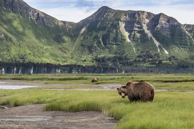 https://imgc.allpostersimages.com/img/posters/usa-alaska-katmai-national-park-hallo-bay-coastal-brown-bear_u-L-Q1D02VO0.jpg?p=0