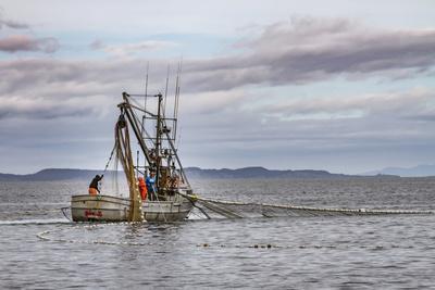 https://imgc.allpostersimages.com/img/posters/usa-alaska-kodiak-chiniak-bay-commercial-fishing-for-salmon_u-L-Q1CZZOG0.jpg?p=0