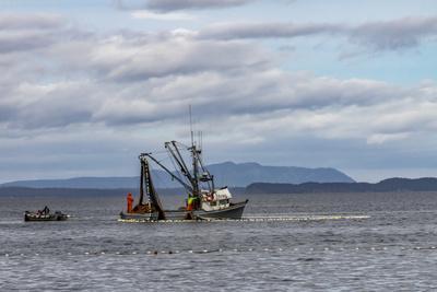 https://imgc.allpostersimages.com/img/posters/usa-alaska-kodiak-chiniak-bay-commercial-fishing-for-salmon_u-L-Q1D01VA0.jpg?p=0