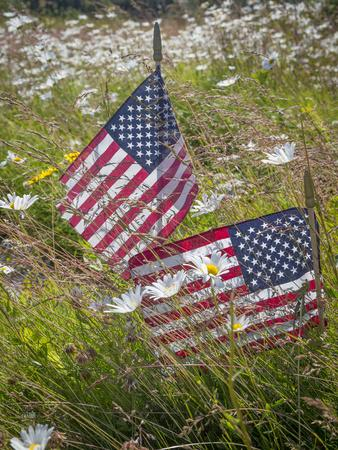 https://imgc.allpostersimages.com/img/posters/usa-alaska-ninilchik-us-flags-in-american-legion-cemetery_u-L-Q1D0KTB0.jpg?p=0