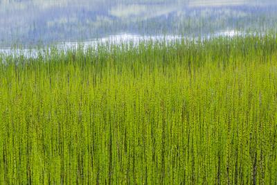 https://imgc.allpostersimages.com/img/posters/usa-alaska-reeds-and-quartz-lake_u-L-Q1CZSJX0.jpg?p=0