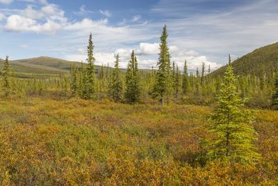 https://imgc.allpostersimages.com/img/posters/usa-alaska-steese-highway-subalpine-tundra-landscape_u-L-Q1D065B0.jpg?p=0