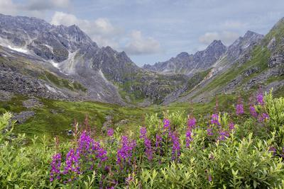 https://imgc.allpostersimages.com/img/posters/usa-alaska-talkeetna-mountains-mountain-landscape-with-fireweed-flowers_u-L-Q1CZZXU0.jpg?p=0