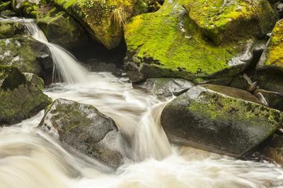 https://imgc.allpostersimages.com/img/posters/usa-alaska-tongass-national-forest-anan-creek-scenic_u-L-Q1CZVLX0.jpg?artPerspective=n