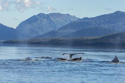 https://imgc.allpostersimages.com/img/posters/usa-alaska-tongass-national-forest-humpback-whales-surfacing-diving_u-L-Q1CZVPP0.jpg?p=0