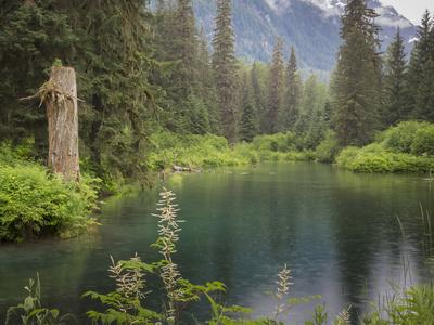 https://imgc.allpostersimages.com/img/posters/usa-alaska-tongass-national-forest-landscape-with-beaver-pond-on-fish-creek_u-L-Q1CZYOY0.jpg?p=0