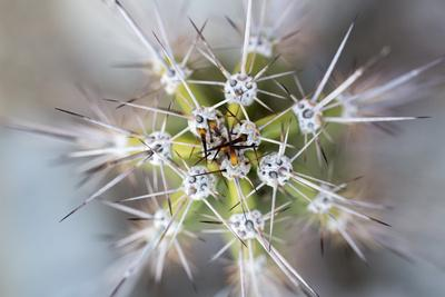 https://imgc.allpostersimages.com/img/posters/usa-arizona-abstract-detail-of-cactus-needles_u-L-Q1D00N70.jpg?p=0