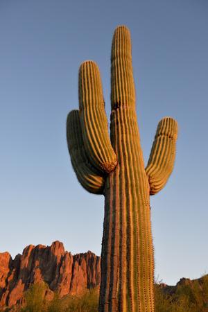https://imgc.allpostersimages.com/img/posters/usa-arizona-lost-dutchman-state-park-saguaro-cactus_u-L-Q1D0GWV0.jpg?p=0