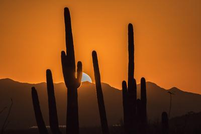 https://imgc.allpostersimages.com/img/posters/usa-arizona-tucson-mountain-park-sonoran-desert-at-sunset_u-L-Q1D02A50.jpg?p=0