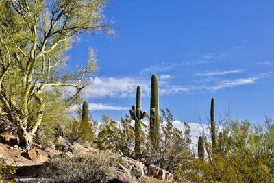https://imgc.allpostersimages.com/img/posters/usa-arizona-tucson-path-through-the-cactus_u-L-Q1D06NO0.jpg?p=0