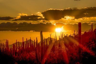 https://imgc.allpostersimages.com/img/posters/usa-arizona-tucson-saguaro-national-park_u-L-Q1CZTG20.jpg?p=0