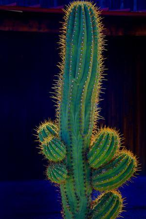 https://imgc.allpostersimages.com/img/posters/usa-california-backlit-saguaro-cactus_u-L-Q1GC3GZ0.jpg?artPerspective=n