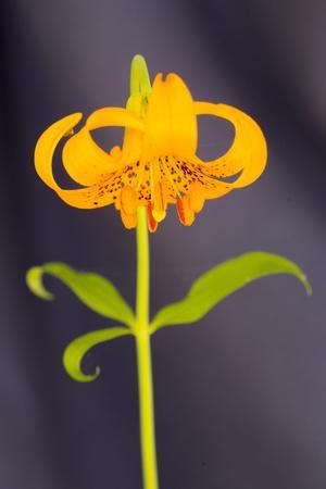 https://imgc.allpostersimages.com/img/posters/usa-california-crescent-city-flower_u-L-Q1CZRZ10.jpg?p=0