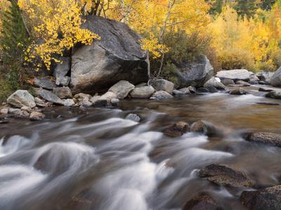 https://imgc.allpostersimages.com/img/posters/usa-california-eastern-sierra-aspens-along-north-fork-of-bishop-creek_u-L-Q12T3QP0.jpg?p=0