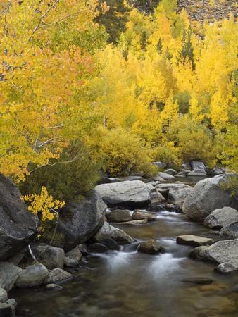 https://imgc.allpostersimages.com/img/posters/usa-california-eastern-sierra-bishop-creek-during-autumn_u-L-Q12T3RX0.jpg?p=0