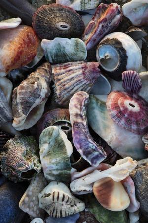 https://imgc.allpostersimages.com/img/posters/usa-california-la-jolla-seashells-on-beach_u-L-Q1D0LNY0.jpg?p=0
