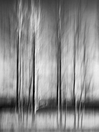 https://imgc.allpostersimages.com/img/posters/usa-california-lake-tahoe-abstract-of-bare-aspen-trees-and-snow-at-carnelian-bay_u-L-Q12T5CX0.jpg?p=0