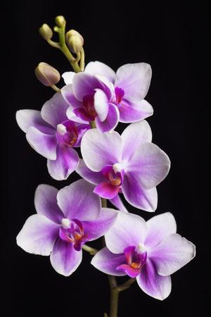 https://imgc.allpostersimages.com/img/posters/usa-california-los-osos-of-orchids_u-L-Q1CZZX30.jpg?p=0
