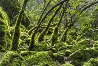 https://imgc.allpostersimages.com/img/posters/usa-california-lush-green-mosses-and-ferns-in-sugarloaf-state-park_u-L-Q1D0JP30.jpg?p=0