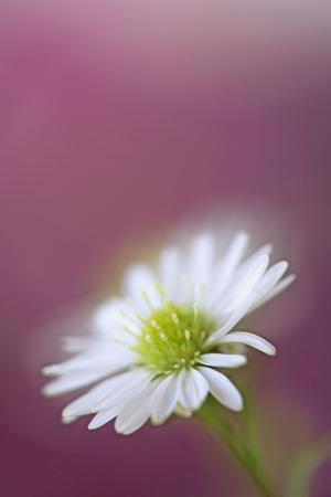https://imgc.allpostersimages.com/img/posters/usa-california-monte-casino-flower-close-up_u-L-Q1D0KR70.jpg?p=0