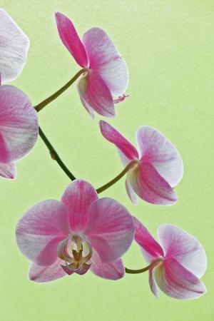 https://imgc.allpostersimages.com/img/posters/usa-california-of-blooming-orchids_u-L-Q1D0AV90.jpg?p=0