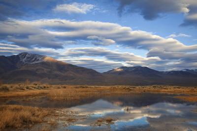 https://imgc.allpostersimages.com/img/posters/usa-california-owens-valley-reflections-in-marsh-pond_u-L-Q1D02VA0.jpg?p=0