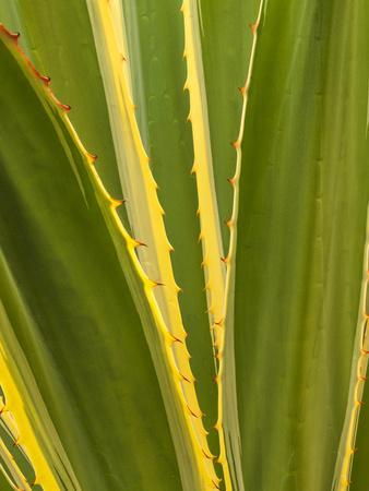 https://imgc.allpostersimages.com/img/posters/usa-california-san-diego-close-up-of-agave-plant_u-L-Q12T39N0.jpg?p=0