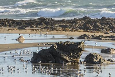 https://imgc.allpostersimages.com/img/posters/usa-california-san-luis-obispo-county-shorebirds-and-rocks-next-to-ocean_u-L-Q1H21PC0.jpg?artPerspective=n