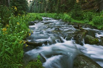 https://imgc.allpostersimages.com/img/posters/usa-california-scenic-of-coldwater-creek_u-L-Q1D0C390.jpg?artPerspective=n