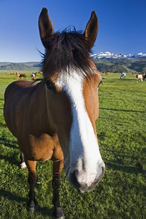 https://imgc.allpostersimages.com/img/posters/usa-california-sierra-nevada-mountains-curious-horse-in-bridgeport-valley_u-L-Q1D0EUI0.jpg?artPerspective=n
