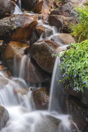 https://imgc.allpostersimages.com/img/posters/usa-colorado-clear-creek-county-close-up-of-cascade-and-chiming-bells-flowers_u-L-Q12T5TE0.jpg?p=0