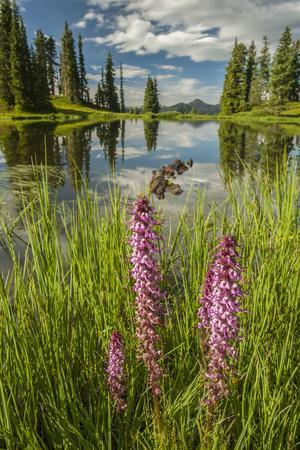 https://imgc.allpostersimages.com/img/posters/usa-colorado-gunnison-national-forest-paradise-divide-and-pond-reflection_u-L-Q12TBOX0.jpg?p=0