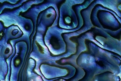 https://imgc.allpostersimages.com/img/posters/usa-colorado-lafayette-abalone-shell-close-up_u-L-PU3NKS0.jpg?p=0