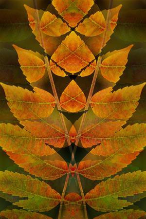 https://imgc.allpostersimages.com/img/posters/usa-colorado-lafayette-autumn-sumac-montage_u-L-PU3NLX0.jpg?p=0