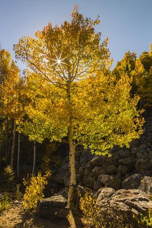 https://imgc.allpostersimages.com/img/posters/usa-colorado-rocky-mountain-national-park-sunburst-on-aspen-tree_u-L-Q1D0QCP0.jpg?p=0