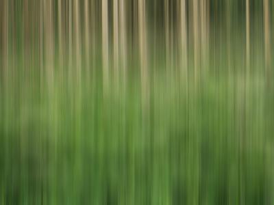 https://imgc.allpostersimages.com/img/posters/usa-colorado-san-juan-mountains-aspen-grove-abstract_u-L-Q1GC2O60.jpg?artPerspective=n