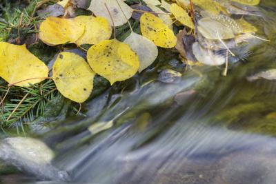 https://imgc.allpostersimages.com/img/posters/usa-colorado-san-juan-mountains-aspen-leaves-in-stream_u-L-Q1D0ST80.jpg?p=0