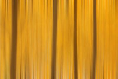 https://imgc.allpostersimages.com/img/posters/usa-colorado-san-juan-mountains-aspen-tree-abstract_u-L-Q1GC2Q00.jpg?artPerspective=n