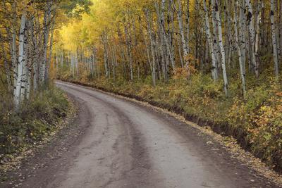 https://imgc.allpostersimages.com/img/posters/usa-colorado-san-juan-mountains-dirt-road-through-aspen-forest_u-L-Q1D0WAO0.jpg?p=0