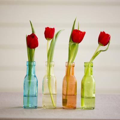 https://imgc.allpostersimages.com/img/posters/usa-florida-celebration-tulips_u-L-Q1D0VQS0.jpg?artPerspective=n