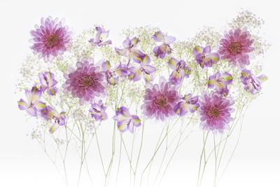 https://imgc.allpostersimages.com/img/posters/usa-florida-floral-bounty_u-L-Q1D0RR70.jpg?p=0